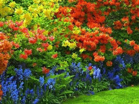 colorful shrubs colorful shrub border winning plant combinations
