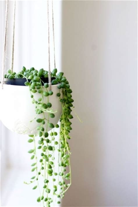 best small hanging plants the best small house plants with 3 bedrooms house floor