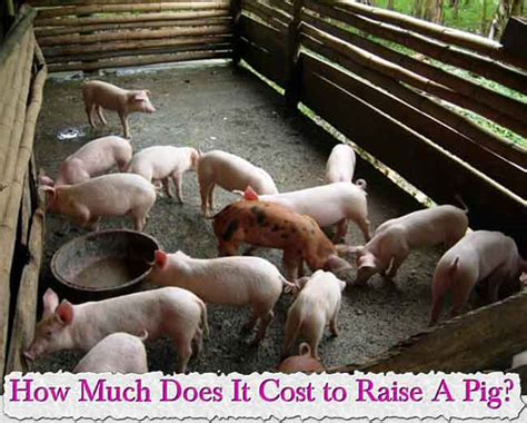 how to raise pigs in your backyard how to raise pigs in your backyard 28 images so you