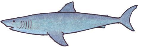 Great White Shark Clip by Great White Shark Clipart Clipart Best