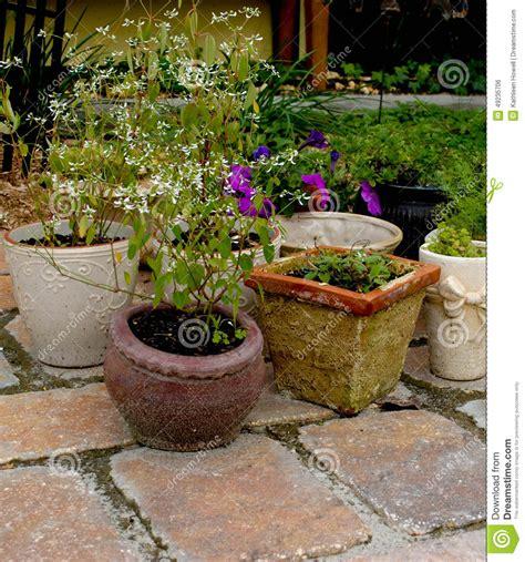 piante da cortile piante in vaso cortile fotografia stock immagine di