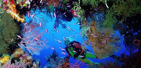 dive italia diving in sorrento scuba diving in sorrento coast diving
