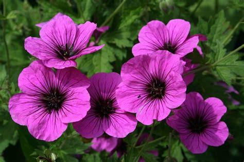 fiori invernali da vaso fiori da balcone piante da terrazzo balconi in fiore