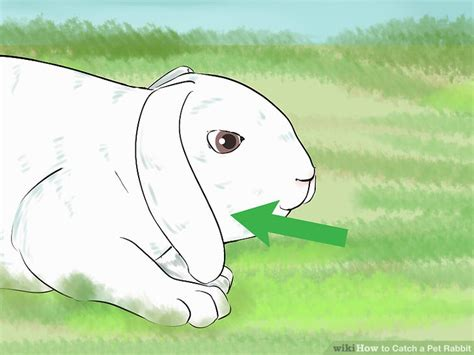 how to catch a rabbit in your backyard how to catch a rabbit in your backyard 28 images how