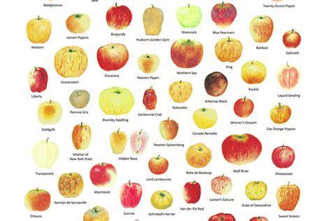 apple varieties chefs at home keeping it simple with sean brennan