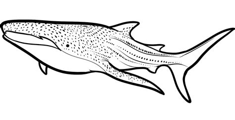 cute shark coloring pages 9320 bestofcoloring com shark coloring pages bestofcoloring com