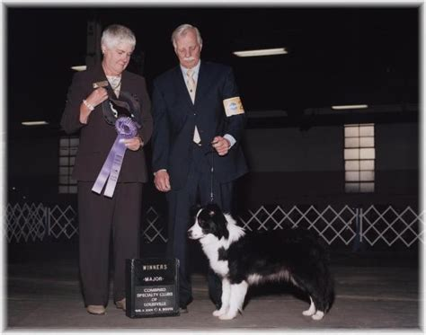 border collie puppies for sale in ky border collie puppies for sale wilsong tinkerbell in kentucky 2009