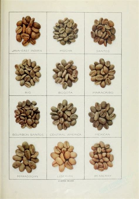 Franchise Coffee Bean coffee bean types coffee beans types of