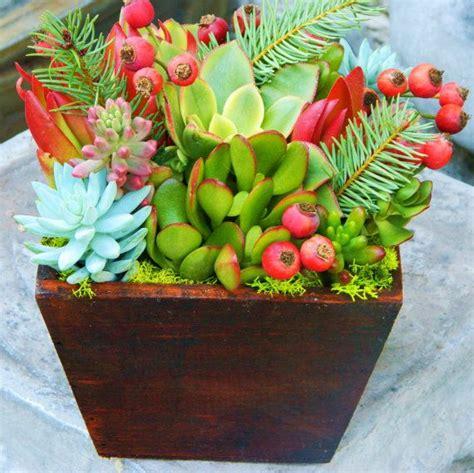 best 25 colorful succulents ideas on pinterest suculent