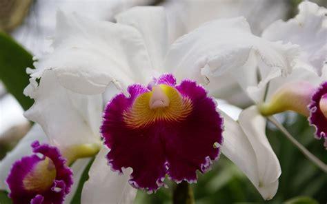 imagenes hermosas de orquideas orqu 237 deas tropicales fotos orqu 237 deas fondos orqu 237 deas