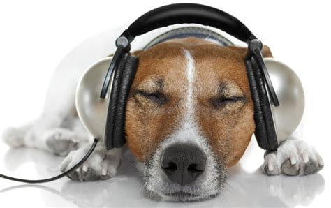 puppy with headphones listening post fresh on the net