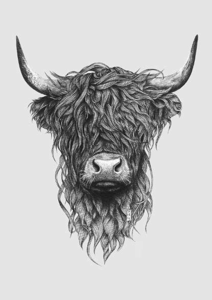 highland tattoo the 25 best highland cow ideas on