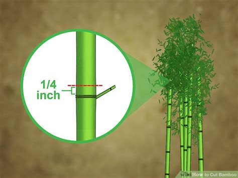 3 ways to cut bamboo wikihow