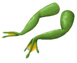 Music Notes Decorations Image Frogs Legs Sprite Png Here Be Monsters Wiki Wikia