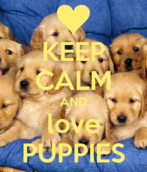 pic of puppies keep calm and puppies poster keep calm o matic