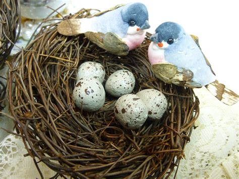 parakeet eggs from fertilization to hatching guide 2018