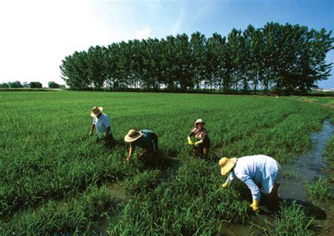 Fungsi Usa artikel pertanian organik sistempertanianorganik