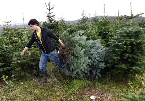 list of places you can chop your own christmas tree down