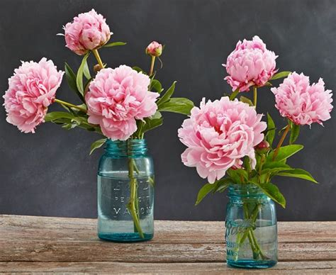 peony arrangement peony season is here keep your peony arrangement simple