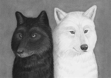 5 11 Black Wolf Black black wolf and white wolf