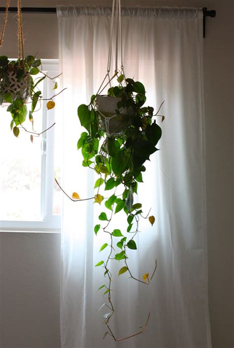 Hanging Plants Indoor Indoor Hanging Plants On Water Plants Indoor