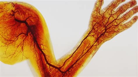 color of blood in veins what is the difference between veins arteries and