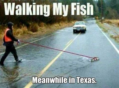 Meanwhile In Texas Meme - meanwhile in texas walking my fish 2015texasstorms