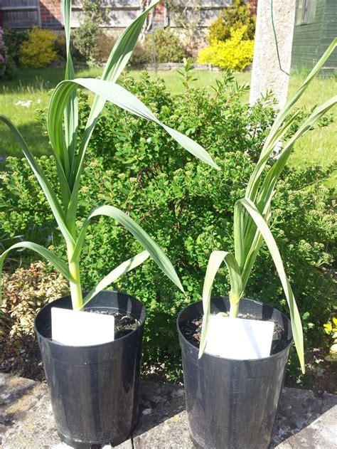 Zone 9 Gardening by 17 Best Ideas About Zone 9 Gardening On