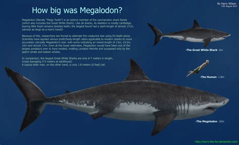 how big is a megalodon facts and pictures