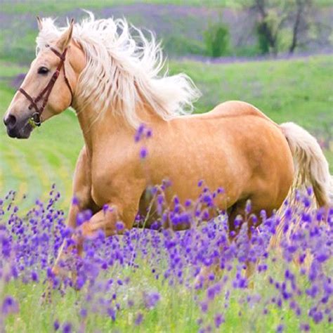 1000 images about horse party on pinterest horse baby horses in lavender fields pictures to pin on