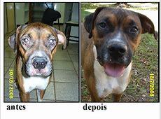 Tratamento da Leishmaniose Visceral Canina L Arginine Results