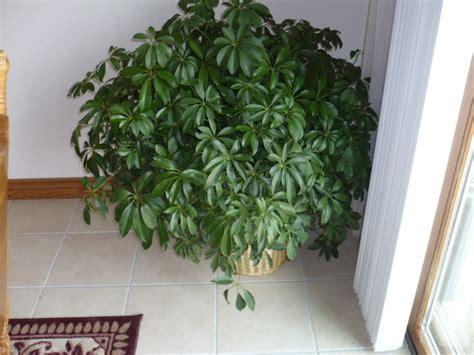 Plante Interieur Facile by Plante D Interieur Facile Entretien Terrarium Plante Verte
