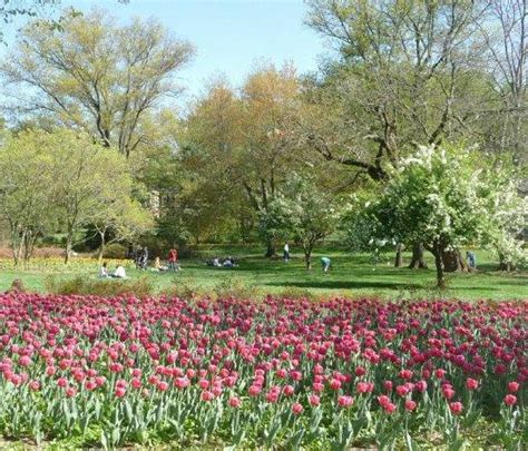 Sherwood Gardens by Sherwood Gardens Is Abloom In Baltimore Md