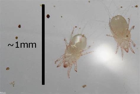 milben in der wohnung milben ameisenwiki
