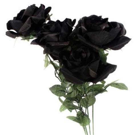 Bibit Bunga Mawar Hitam mawar3 mawar hitam