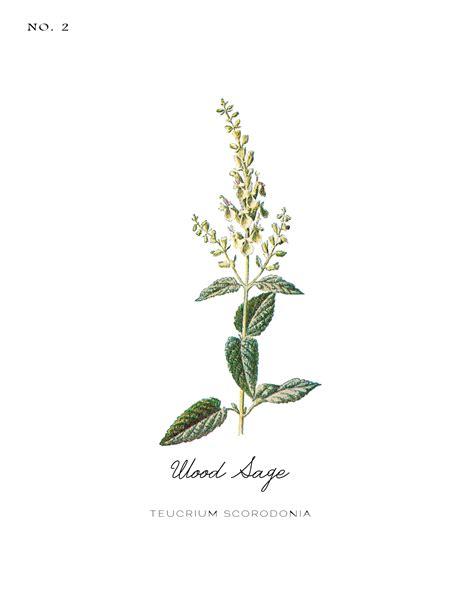 printable botanical images free vintage inspired botanical printables a burst of