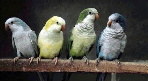 quaker color parrot zozeen