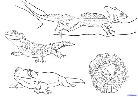 desert lizard coloring pages free coloring pages of desert lizard