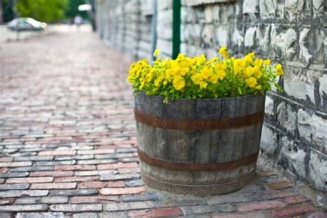come coltivare fiori come coltivare fiori nelle botti di legno pollicegreen