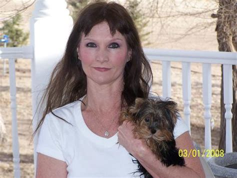 yorkies for sale in scotland yorkie breeders in arizona breeds picture