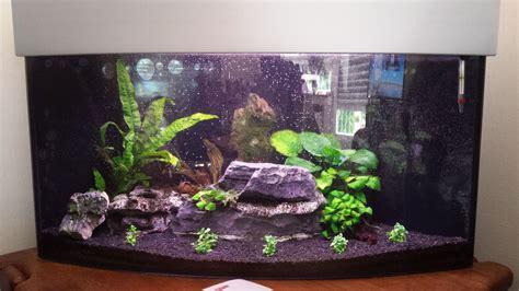 Aquarium Mit Wurzeln Einrichten 6735 by Einrichten Eines Aquariums 1 Preise Aquarien Service