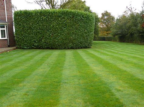 hedge cutting in knutsford cheshire jhps gardens jhps