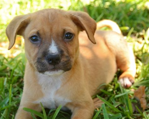 puppy adoption south florida milo s rescue of south florida everything country