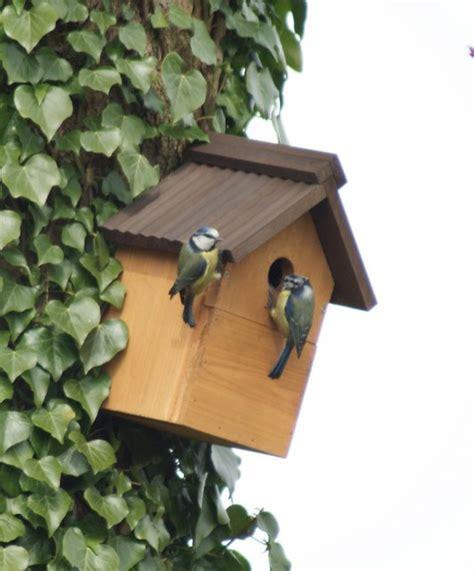 Tempat Kulakan Pakan Burung Jogja shelter hijau terakhir untuk ikon kota jogja see book