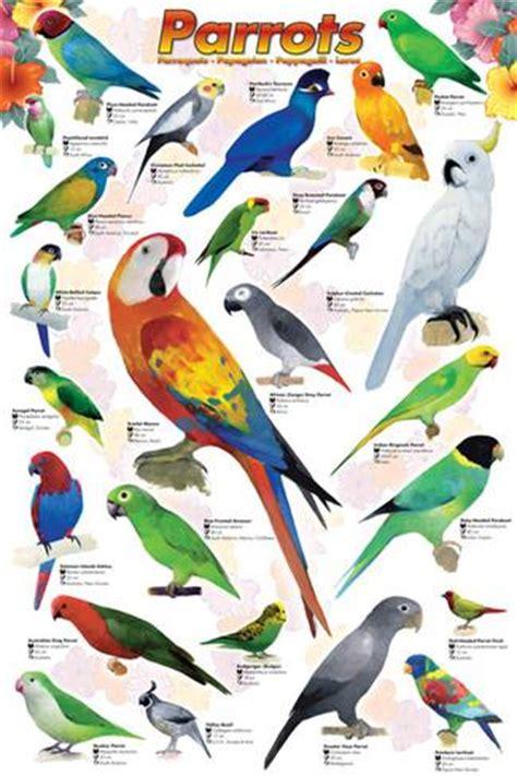 parrots prints at allposters com