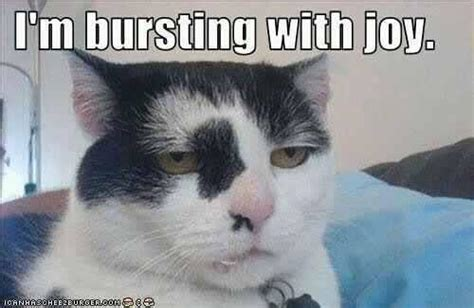 Funny Monday Morning Memes - i feel like this monday morning jokes memes pictures