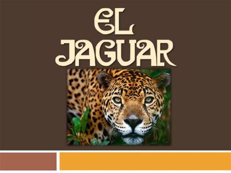 imagenes de jaguar hembra especie en peligro de extinci 243 n el jaguar