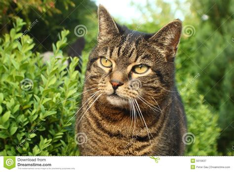 toms cat tom cat royalty free stock photography image 5515637