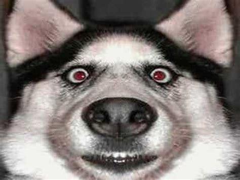 imagenes chistosos de perros perros chistosos youtube