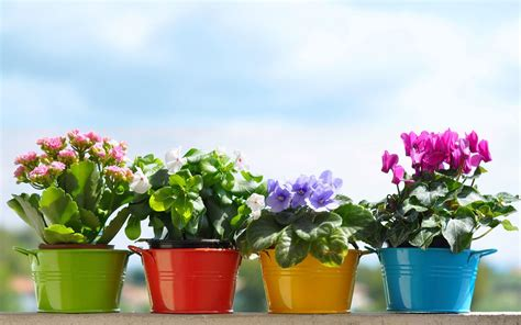 images of 6 flowers in pots top 30 summer flowering plants for pots ferns n petals official